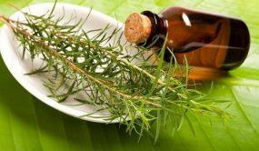 польза масла чайного дерева, рецепты масок с маслом чайного дерева