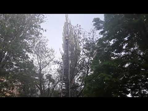 Спасение кота с верхушки дерева