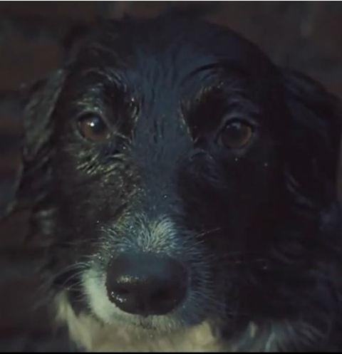 «Найди в России друга»: приюти собаку