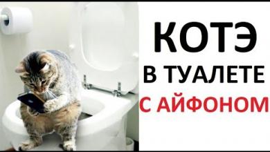 Photo of Лютые приколы. Кот в туалете с айфоном