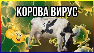Photo of Карантинный юмор: лучшие шутки в Сети